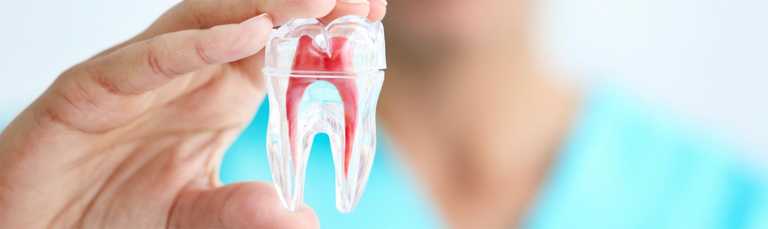 Teeth Root