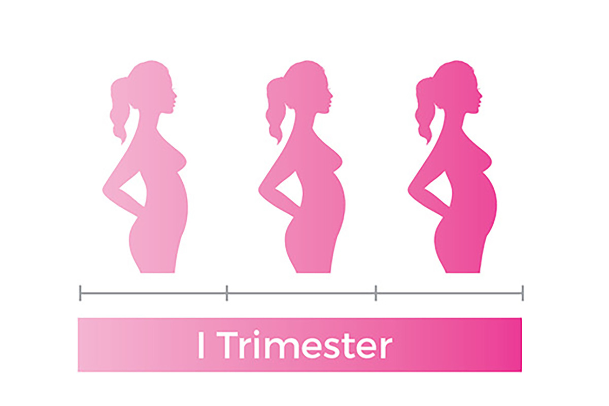 pregnancy first trimester