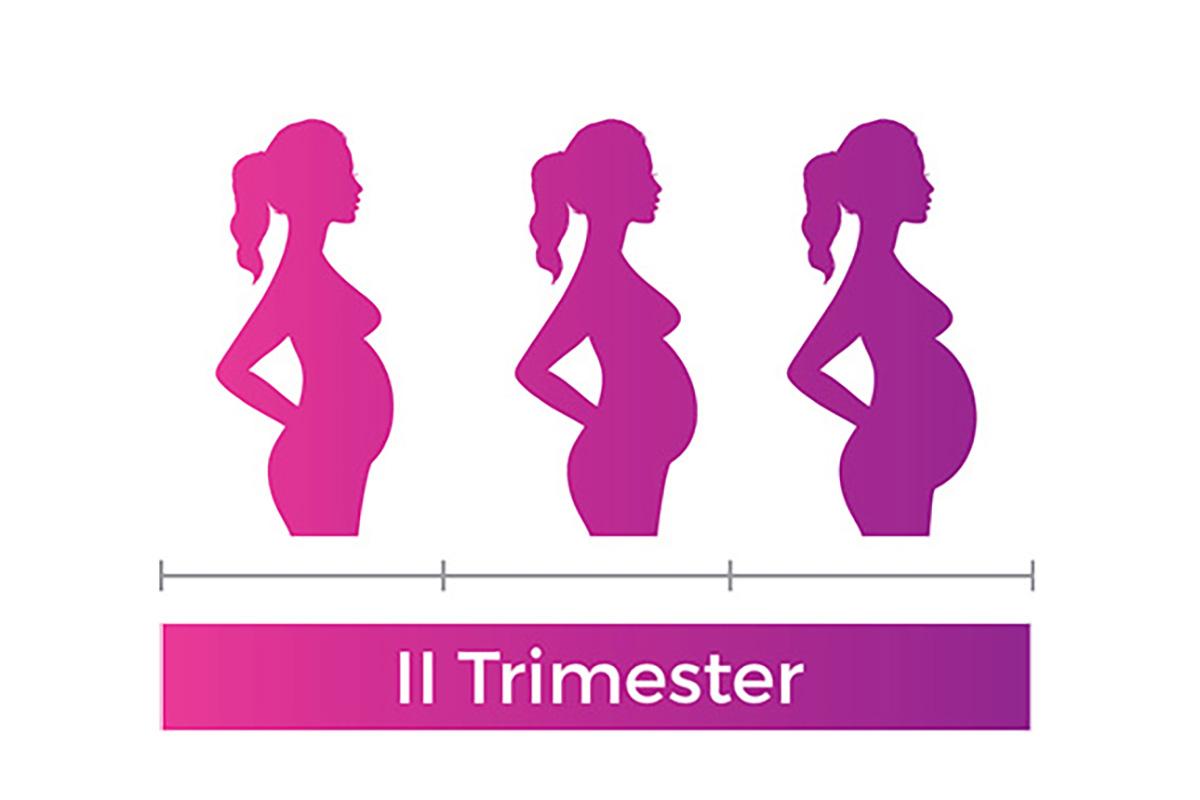 pregnancy second trimester