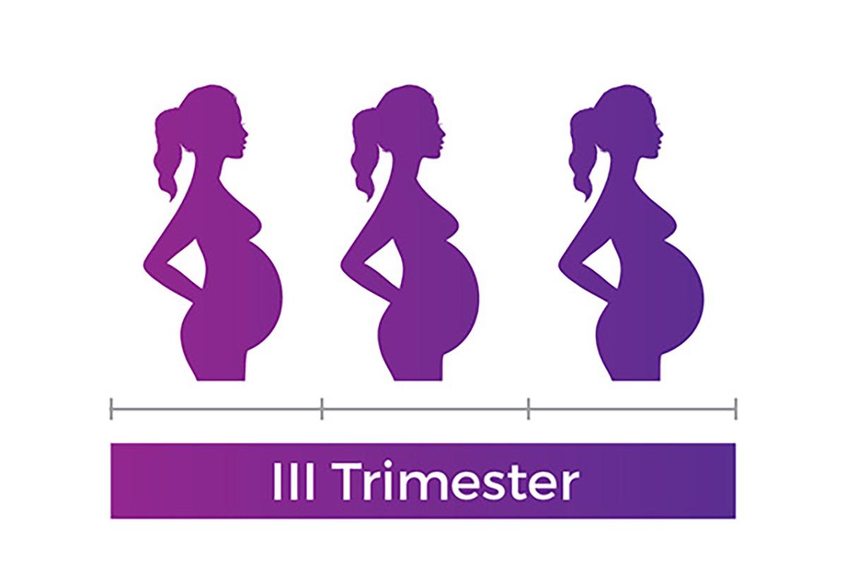 pregnancy third trimester